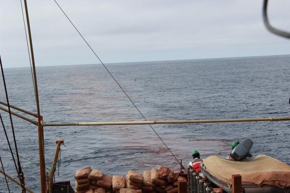 geografia da salmão do haida fertilização do ferro oceânico despejo agosto 2012 programas de geoengenharia