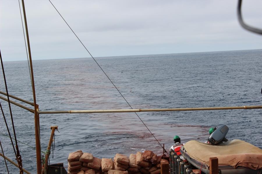 haida salmon geoengineering ocean iron fertilization dump august 2012 geoengineering programs